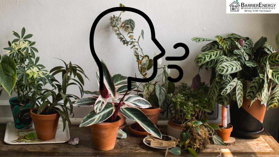 Do House Plants Help Indoor Air Quality?
